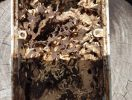 White ant nest in electrical box