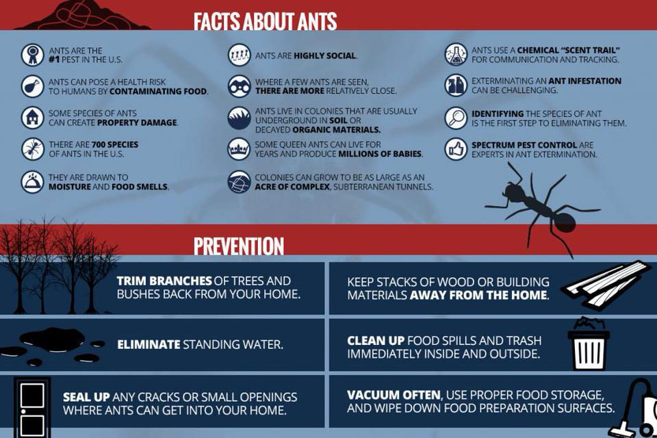northern beaches ant treatment