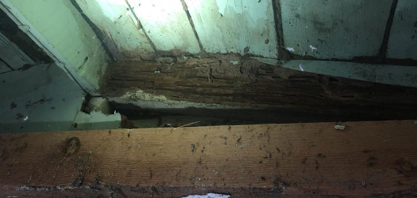 northern beaches termite infestation treatment
