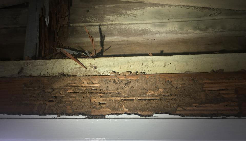 termite pest inspections northern beaches
