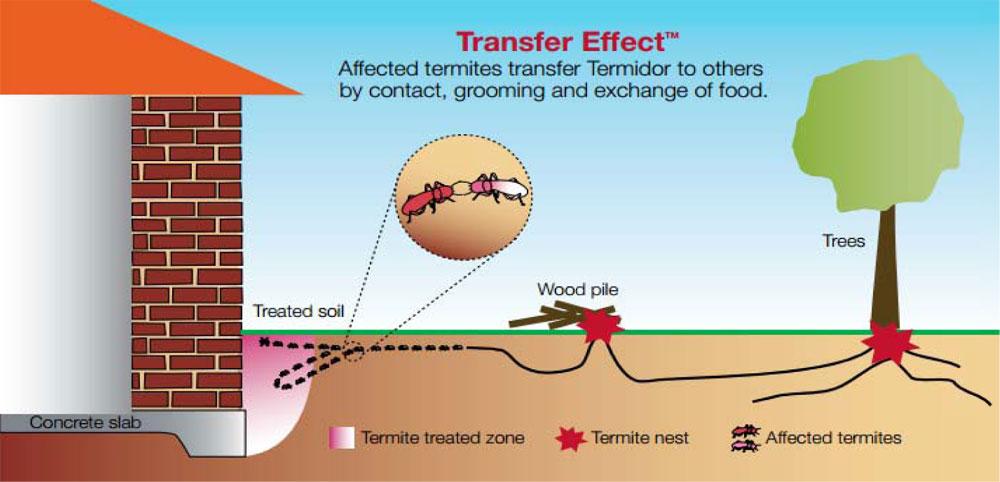 treating termite tree infestation
