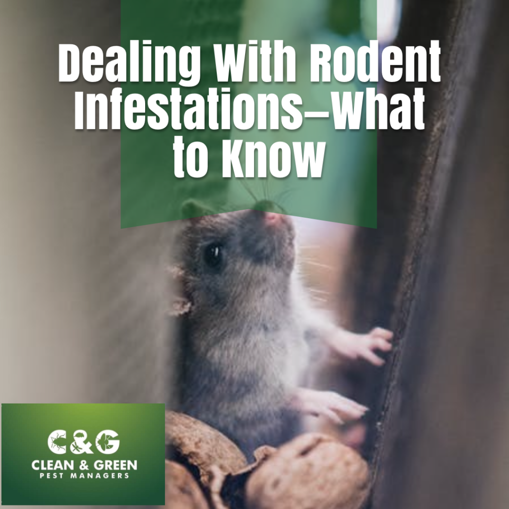 Dealing with Rodent Infestations
