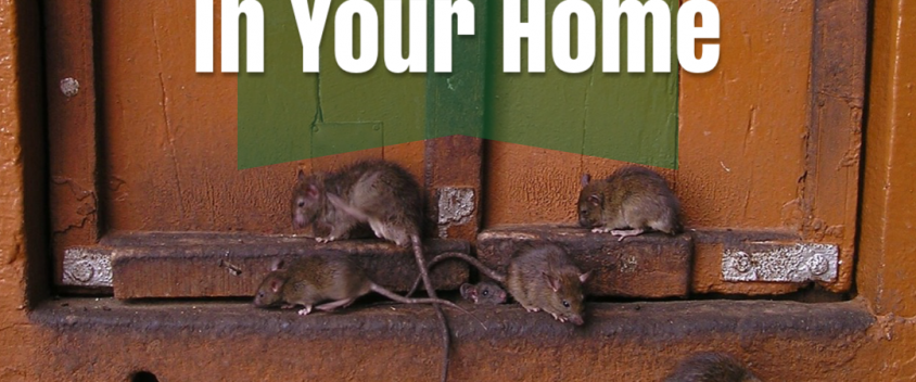 Get rid of rats title cover