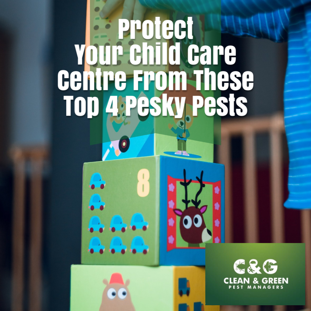 Protect Your Child Care Centre from Pests