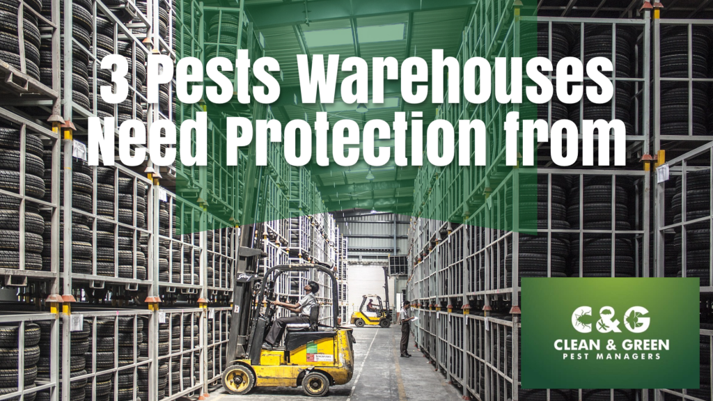 3 Pests Warehouses Need Protection From