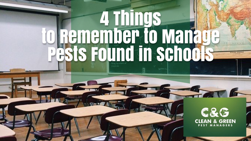 Things to Remember to Manage Pests Found in Schools