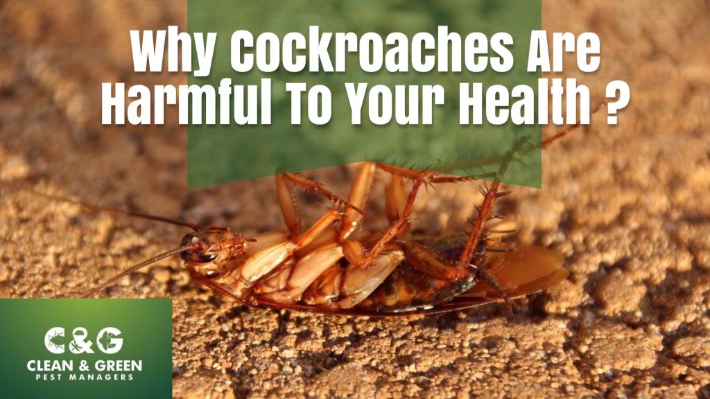 a cockroach on a surface