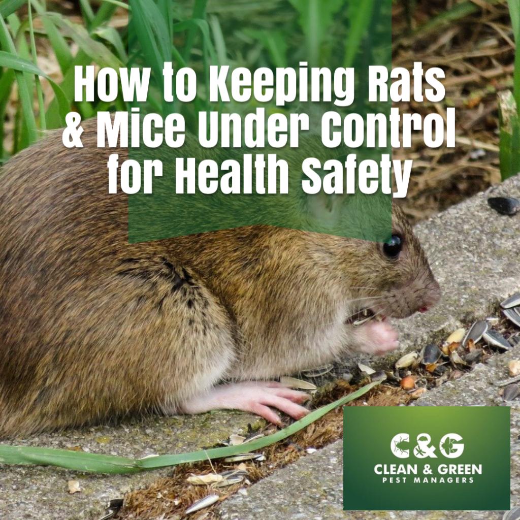 rats & mice control