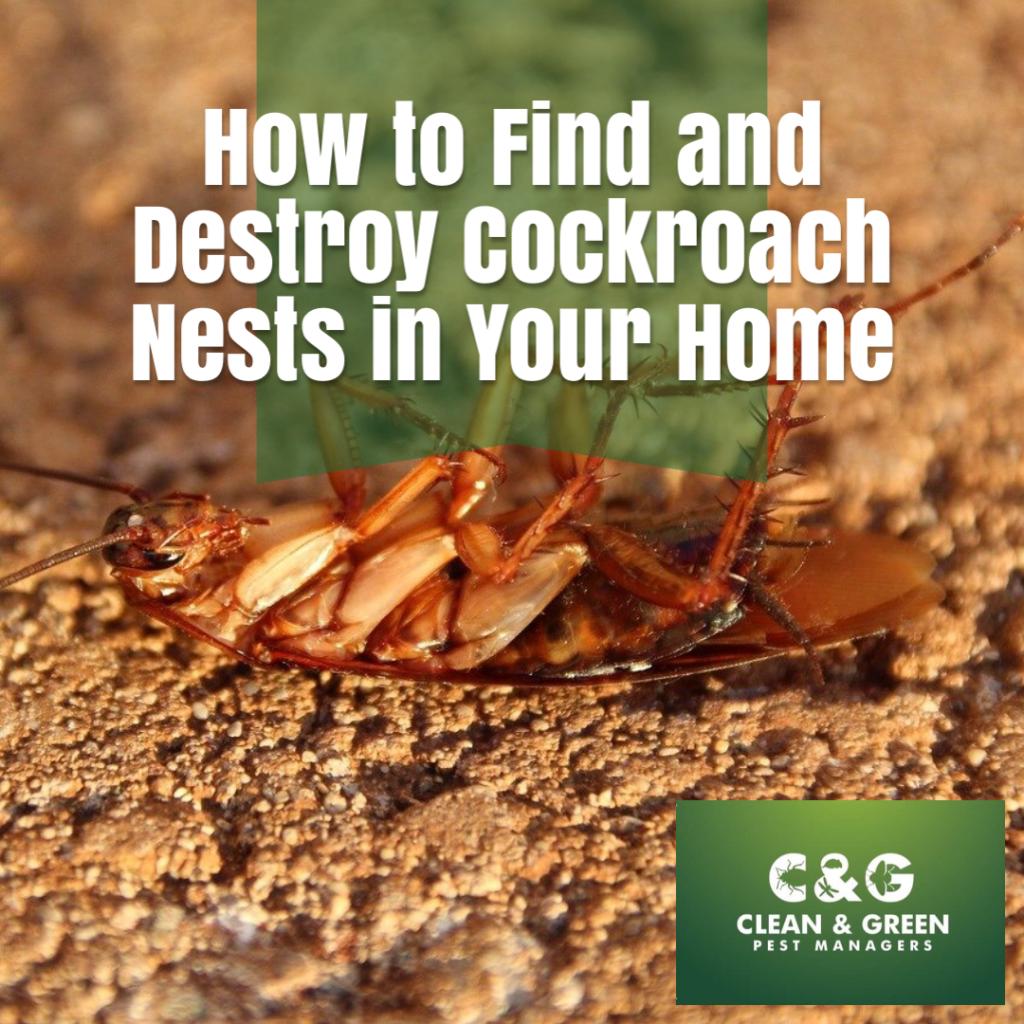 destroy cockroach nest