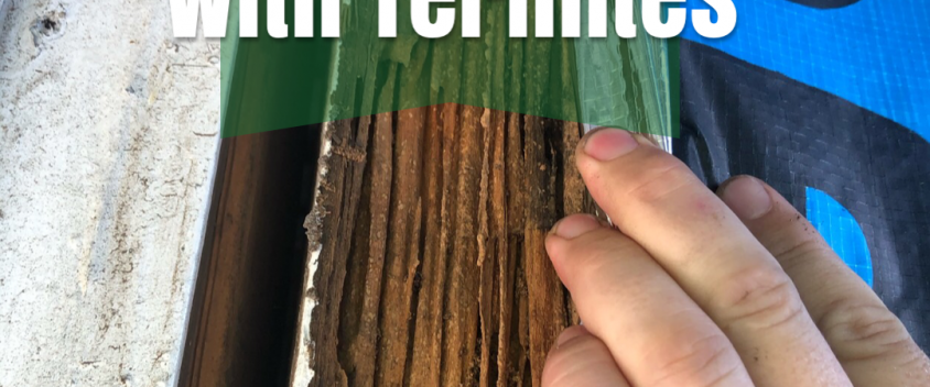 dealing with termites