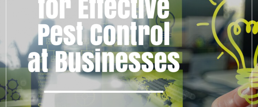 6 Valuable Tips for Effective Pest Control at Businesses