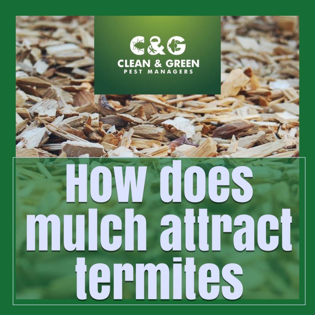 mulch attract termites