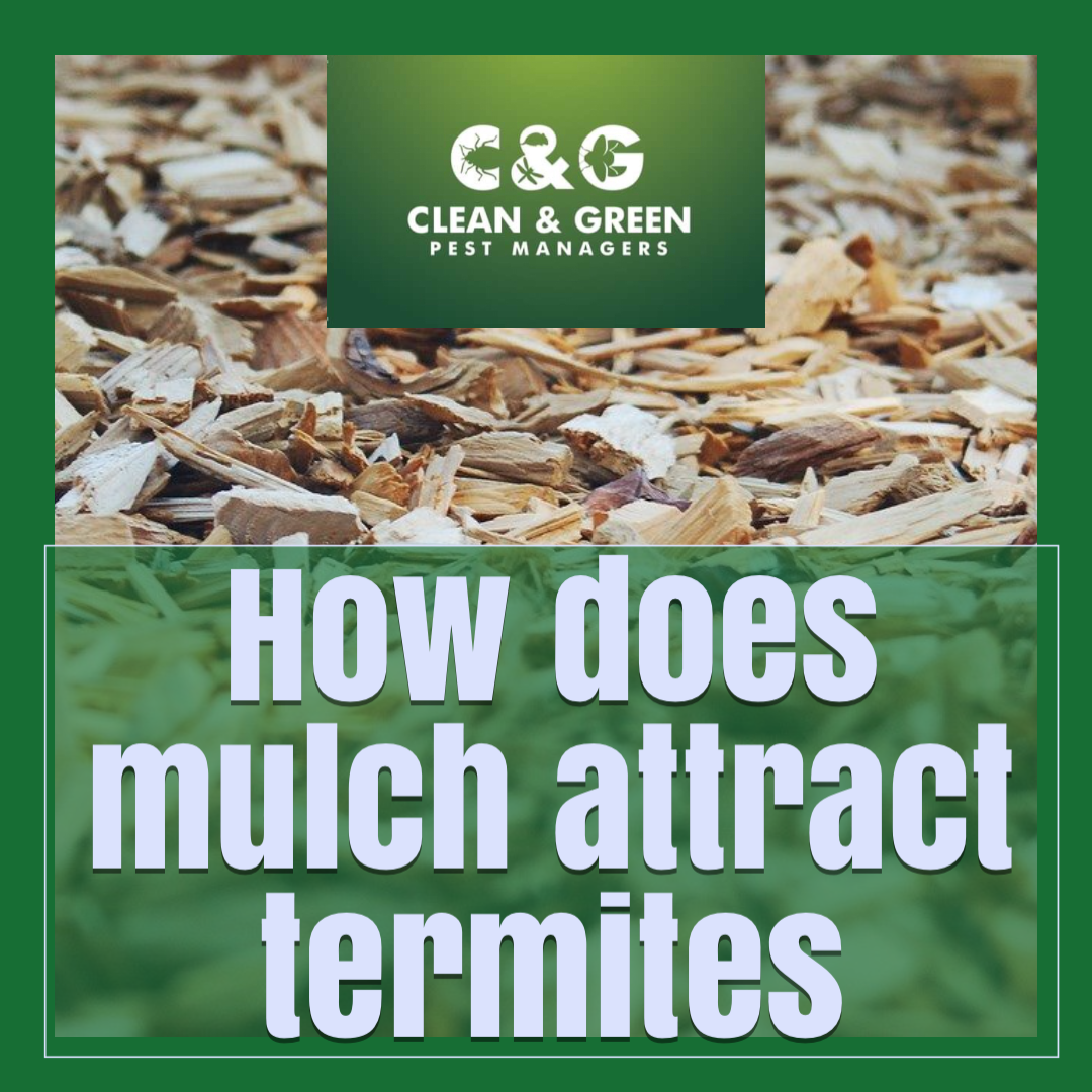 mulch attract termites