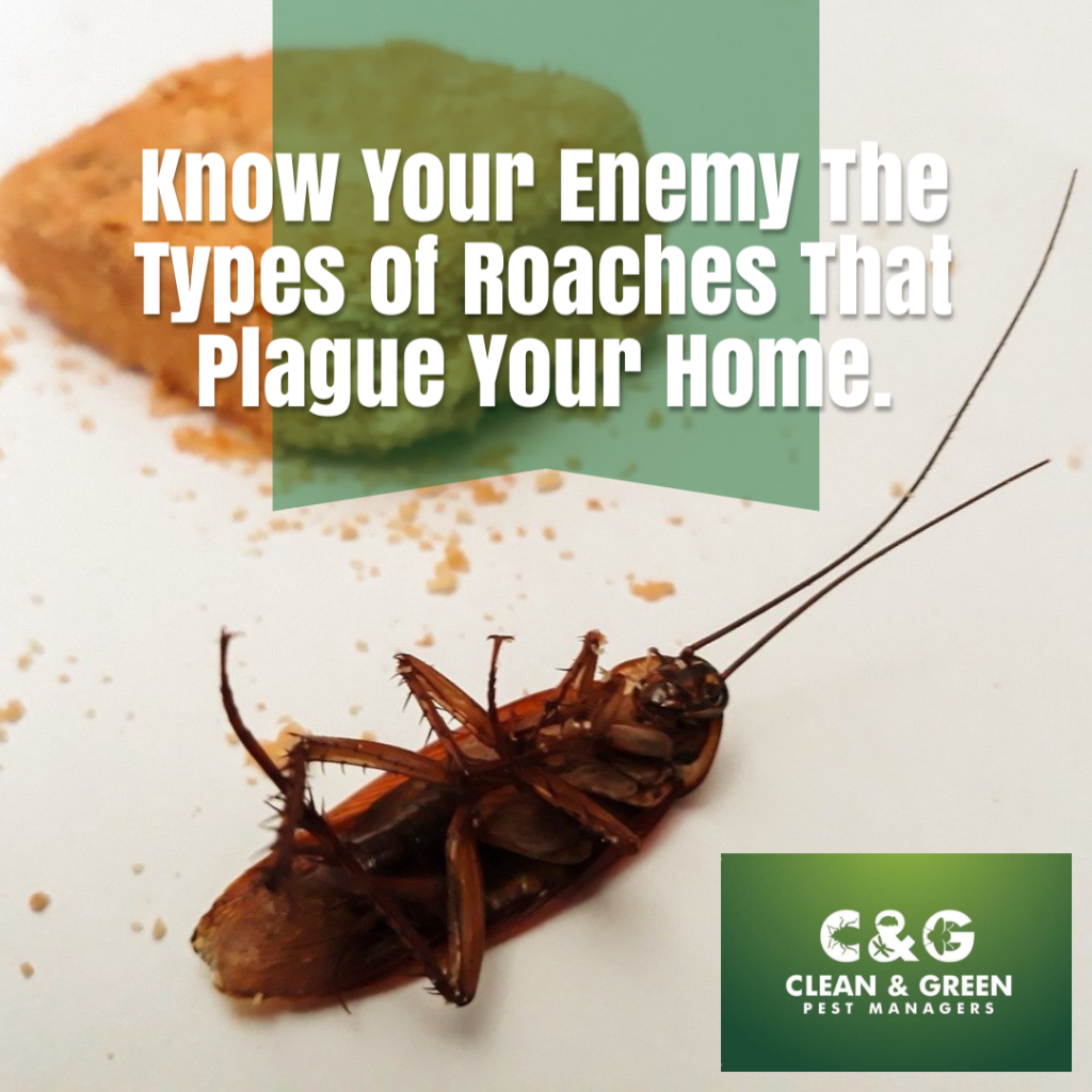 The Types of Roaches That Plague Your Home