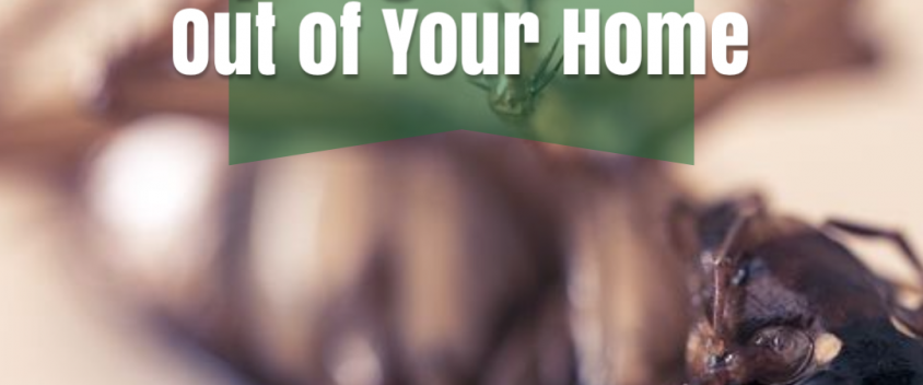 4 Essential Tips to Keep Bugs and Pests Out of Your Home