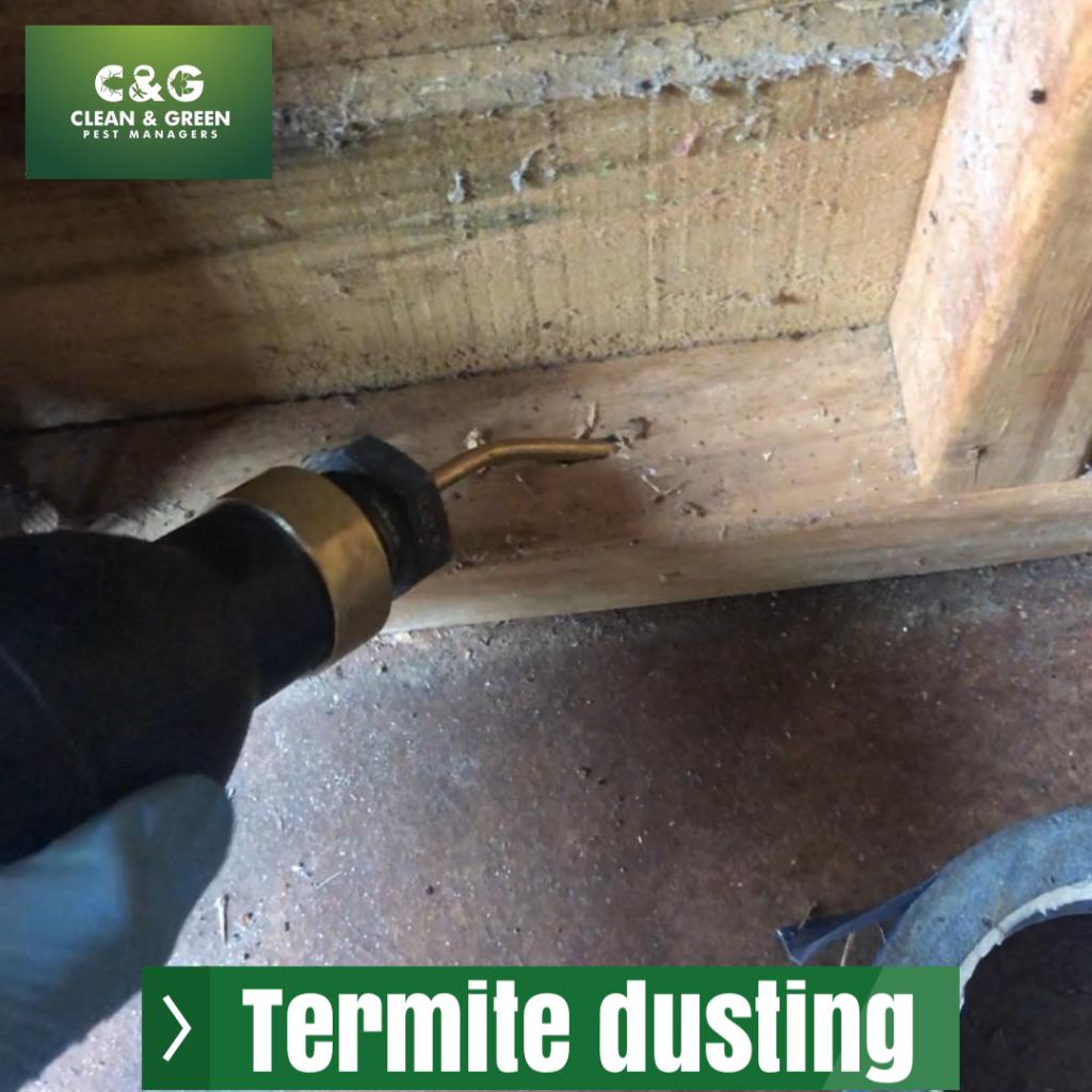 termite dusting