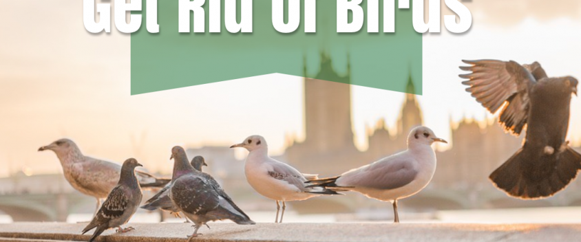 Here's Why You Need a Professional to Get Rid of Birds