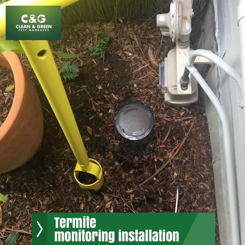 termite monitoring installation