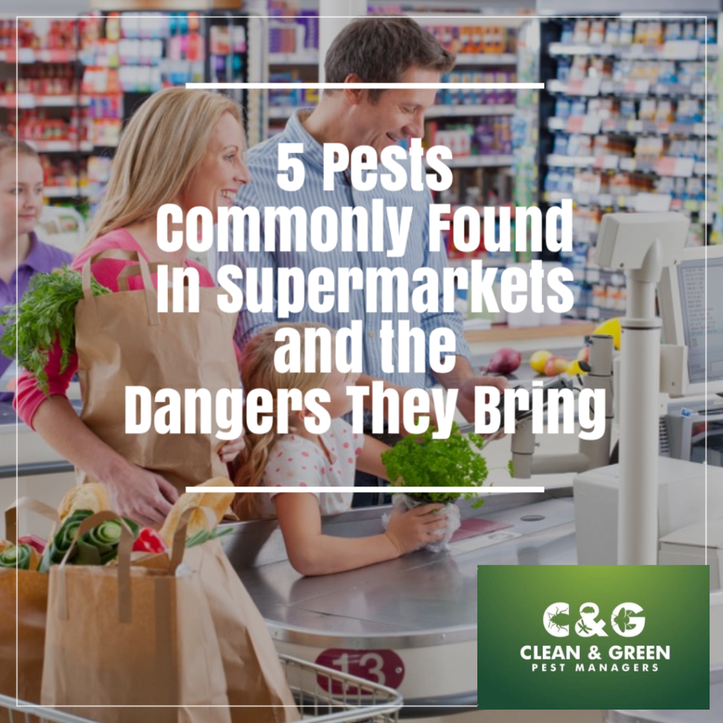 Pests Found In Supermarkets and the Dangers They Bring