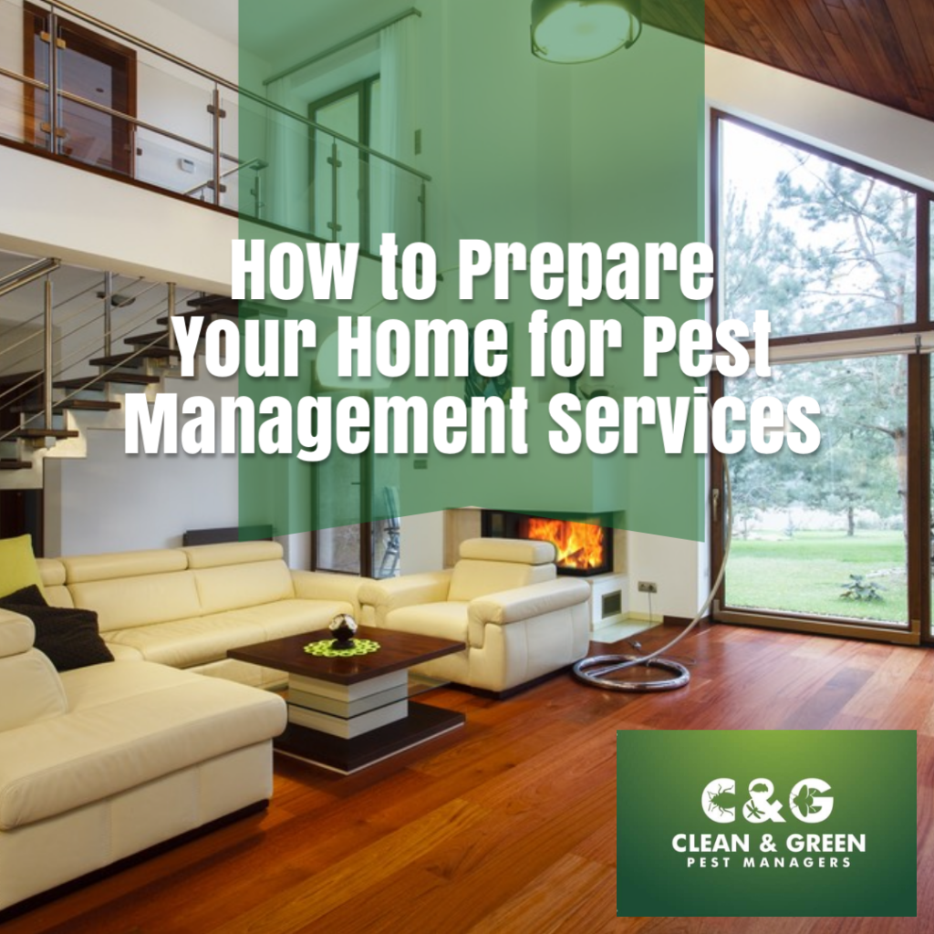 How to Prepare Your Home for Pest Management Services