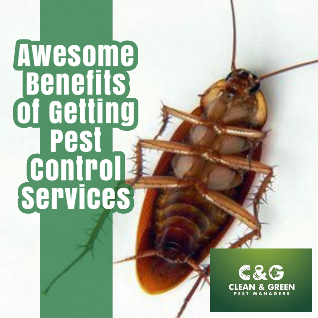 Awesome Benefits of Getting Pest Control Services