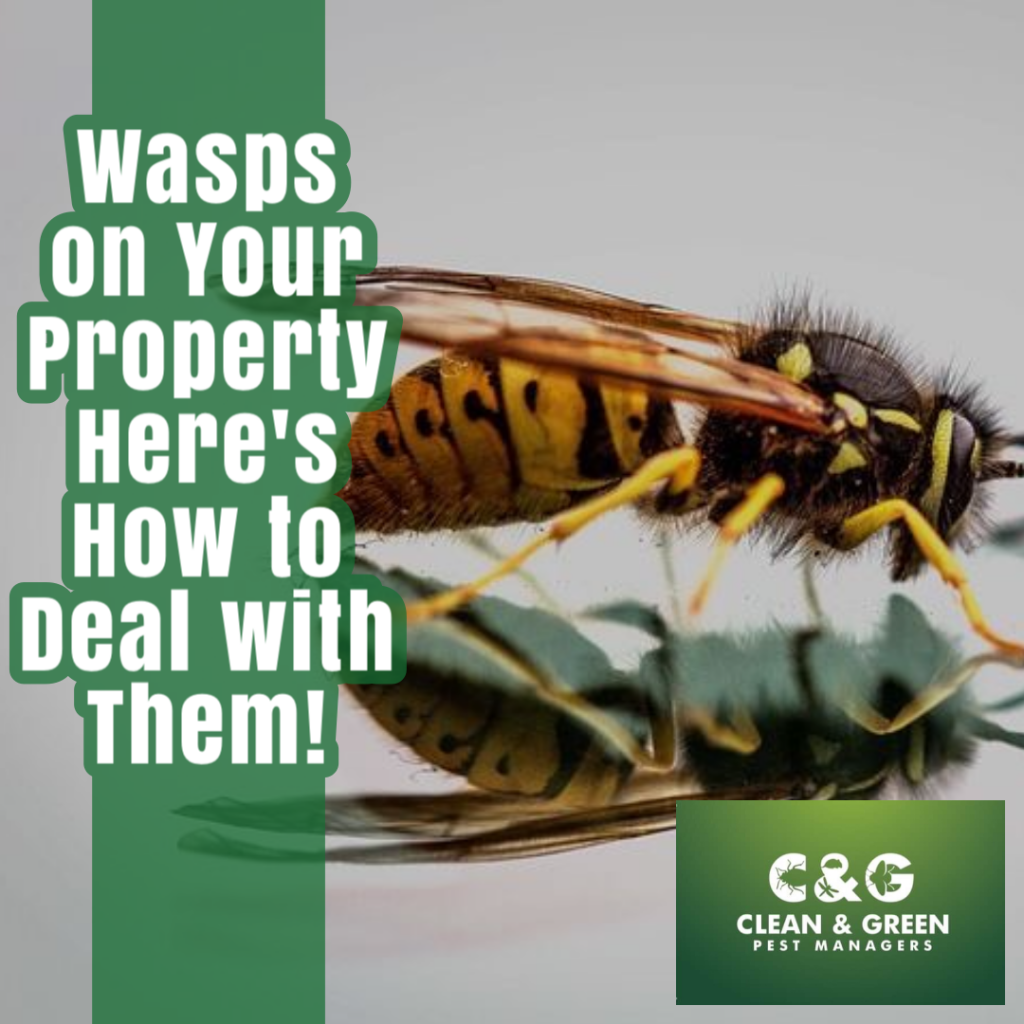 How to deal with Wasps properly