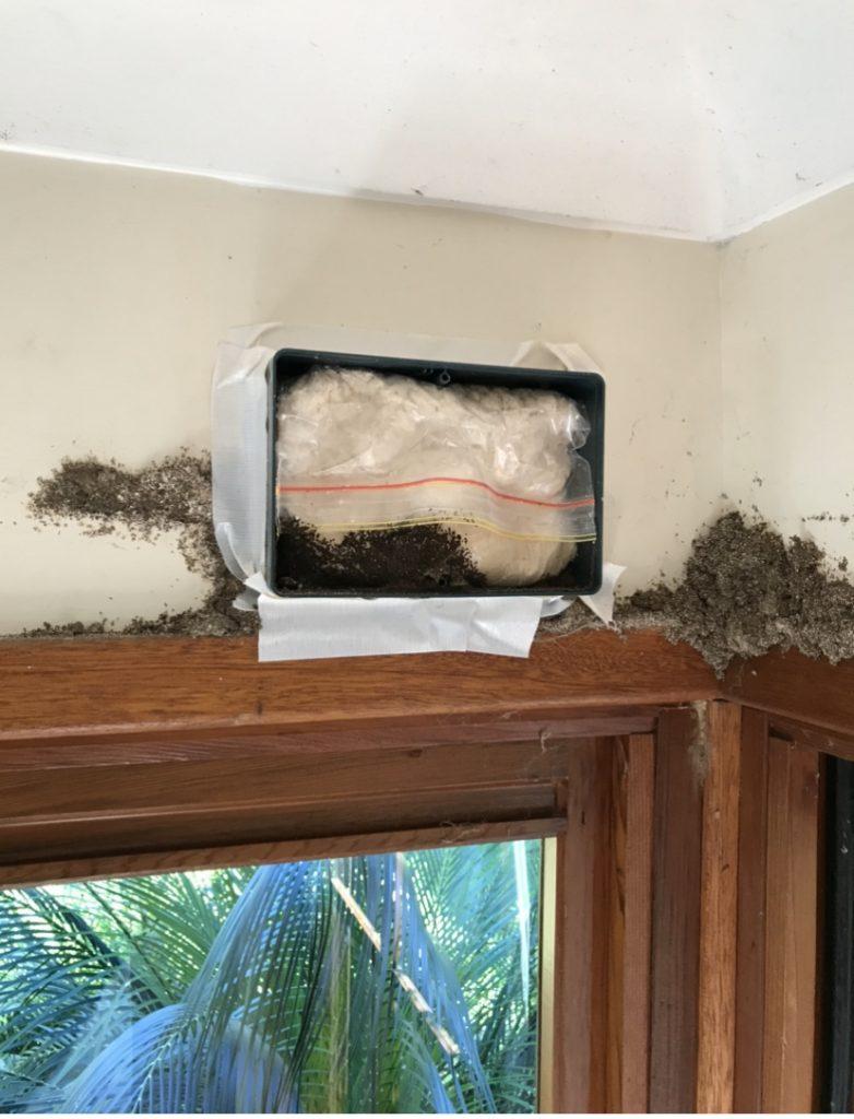 Termite foaming