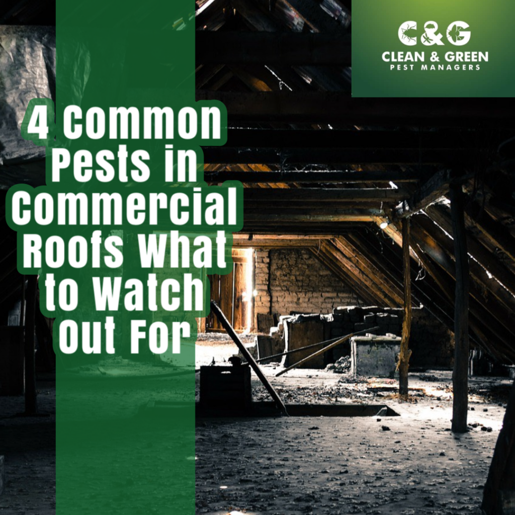 4 common pests in commercial roofs