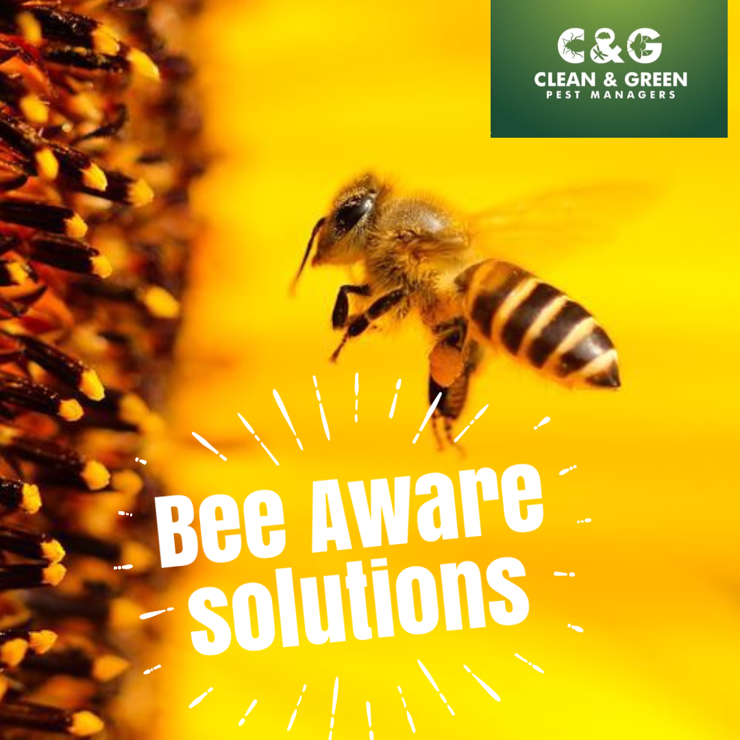 bee aware solutions