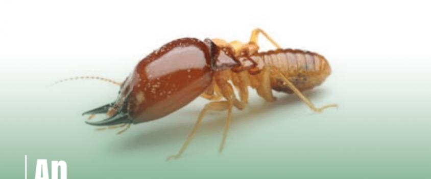 Overview of Termite Classifications and Species