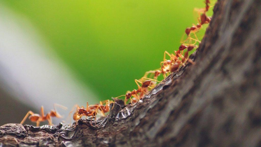 Ant trail