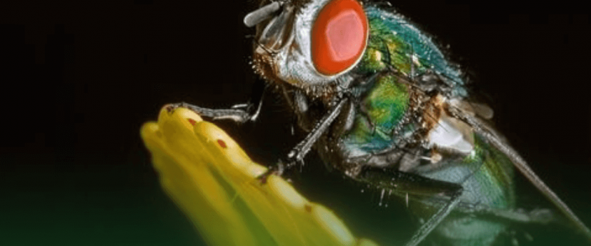 How to control flies (1)