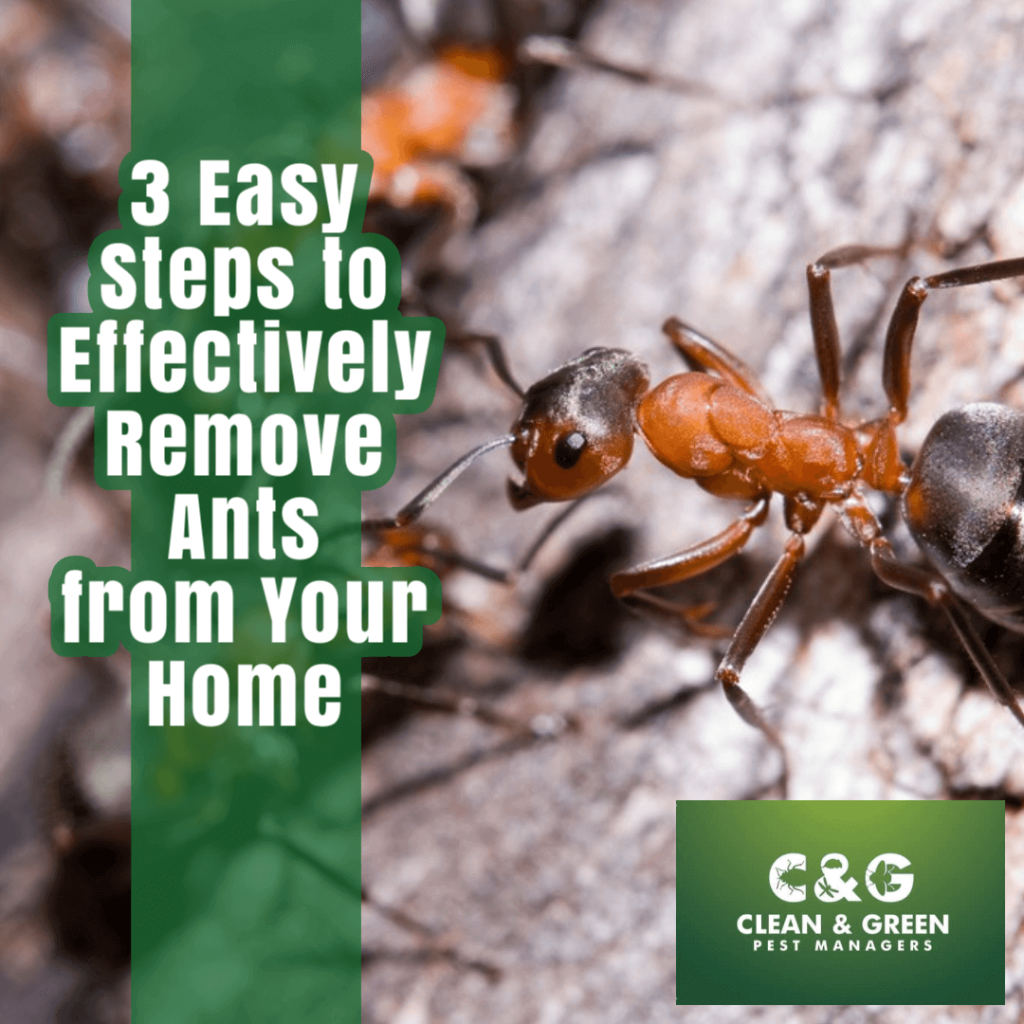 How to remove ants