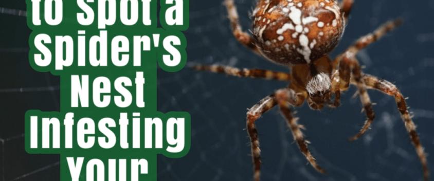 Spider-nest-eradication-